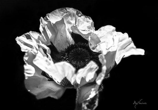 Photo/ Foto Mag Wozniak - The sense 1